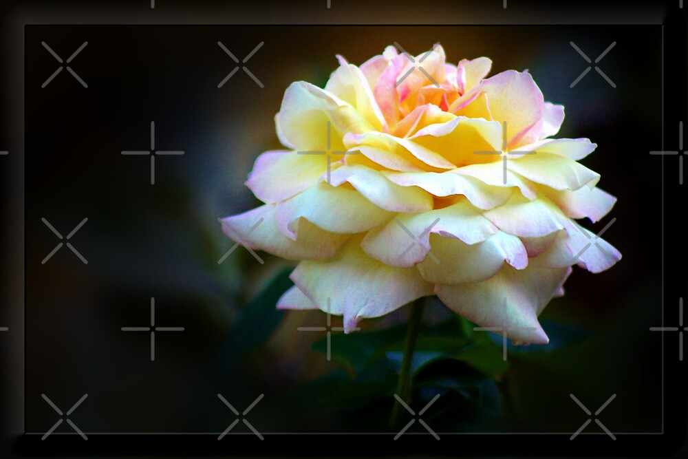 Full Bloom Beauty by Julie's Camera Creations <><