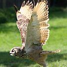 Flying Bengal Eagle Owl by John Dalkin