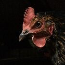 Hen by Charlie Mclenahan
