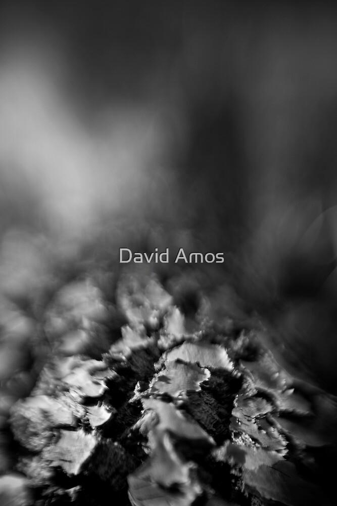 Berima XVI - Lensbaby by David Amos