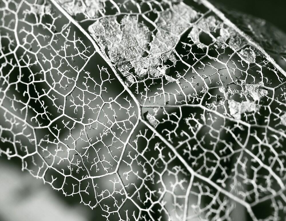 Leaf by torimages