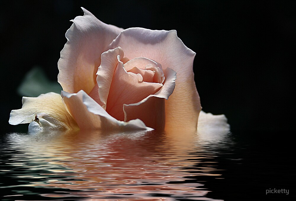 water rose by picketty