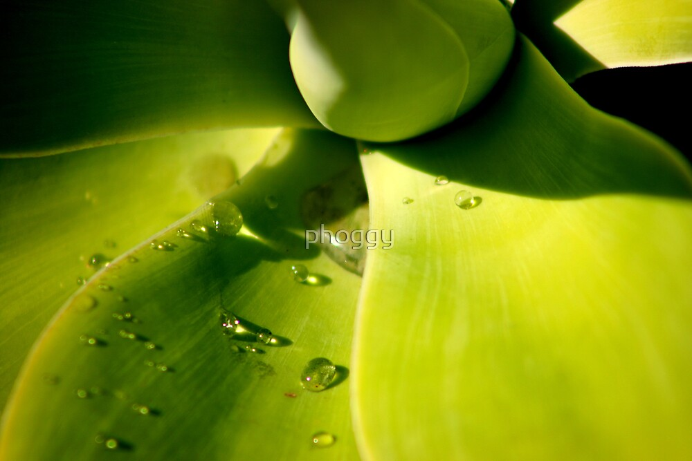 droplets by phoggy