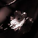 Cherry Blossom in Monochrome by Evita