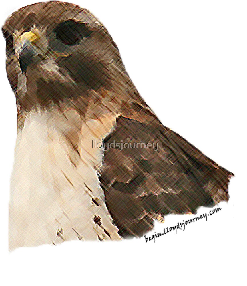 Hawk Head Crosshatched by lloydsjourney