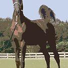 American Saddlebred Weanling by Oldetimemercan