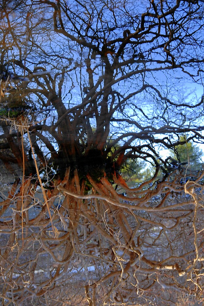 Rooted... by LindaR