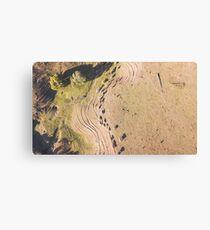 Country cows on the farm Canvas Print