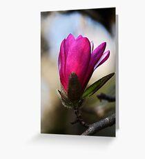 Magnolia -Pink- Greeting Card