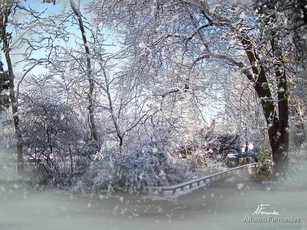 Snowing by Alfonso Fernandez