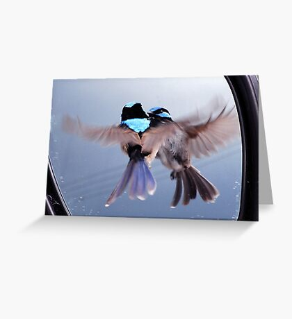 Twins - Superb Fairy-wren Greeting Card