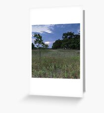 Central Texas Woodland Greeting Card
