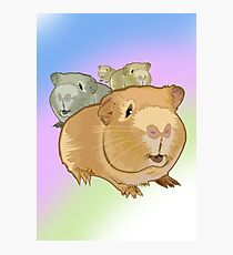 Guinea Pigs Photographic Print