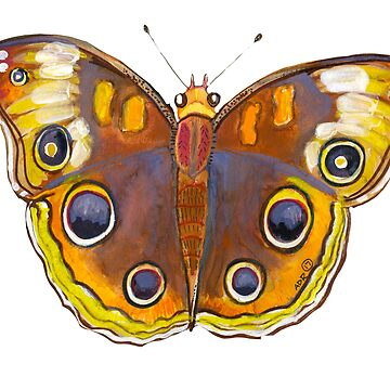 Junonia Coenia or the Common Buckeye butterfly by SurlyAmy