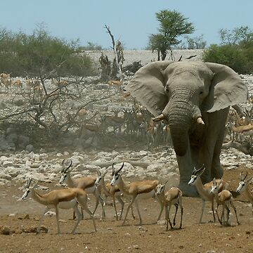Elephant Scatters Springbuck - Namibia by AStevensAdmin