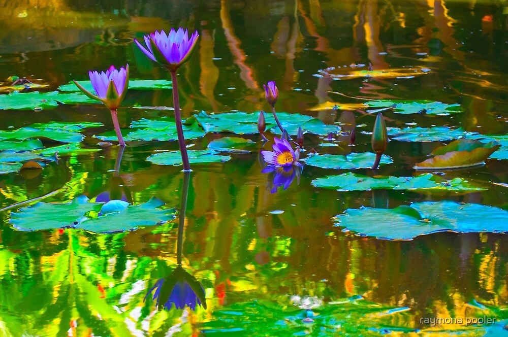 Flower reflections by raymona pooler
