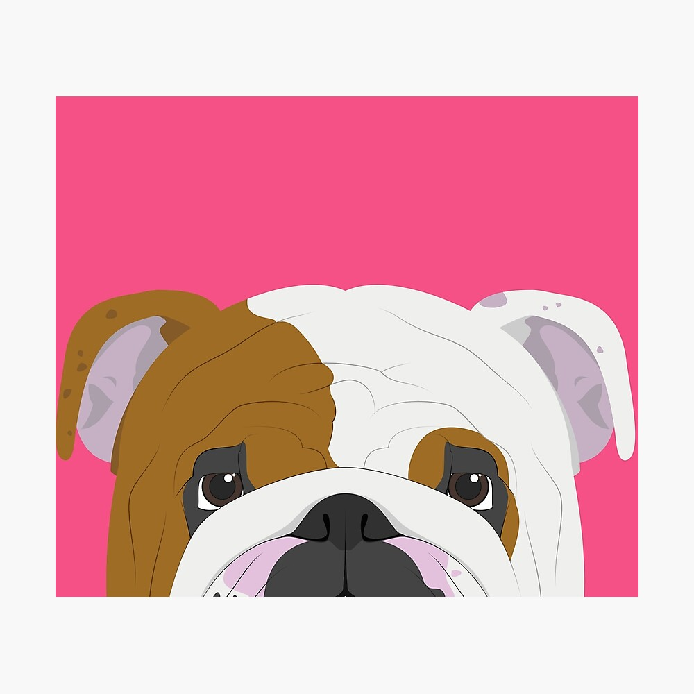 English Bulldog Cute Dog Portrait Illustration Photographic Print