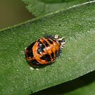 Ladybird to Be by AnnDixon