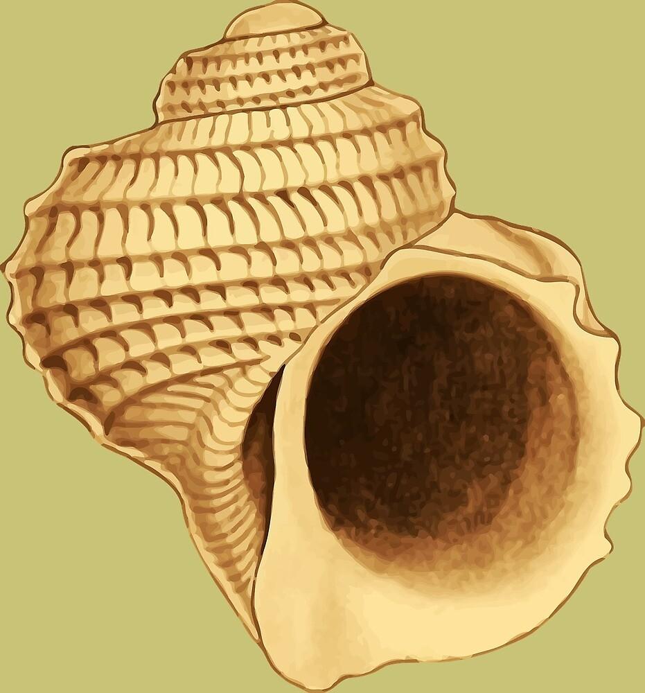 shell by Yuna26