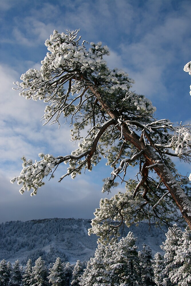 Snow Flowers by Bonnie  Barbey