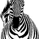 Zebra Alternative Cutout by Anna Phillips