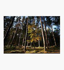 autumn in crathes woods  Photographic Print
