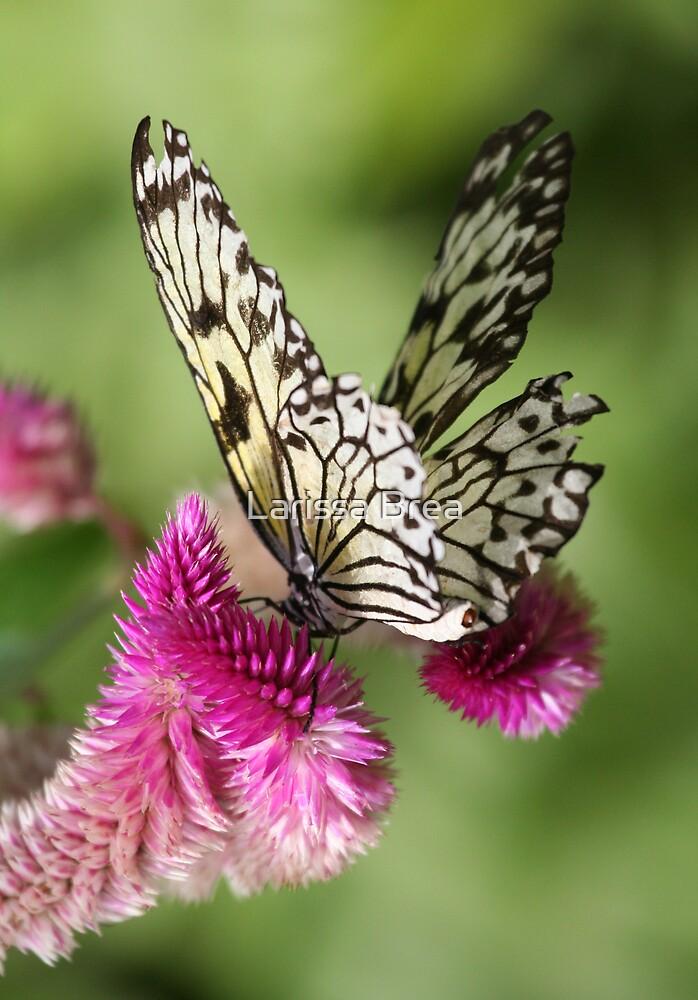 Butterflies Kisses II by Larissa Brea