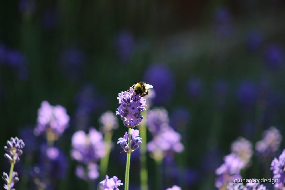 Bee on Lavender by lewbarberdesign