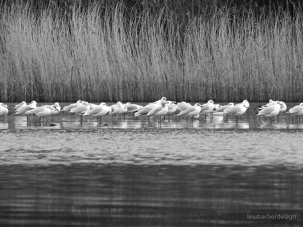 Gulls on Ice by lewbarberdesign
