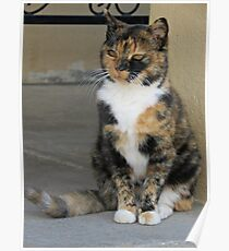 Peaceful-Calico-Cat-by-DotingOnCrafts Poster