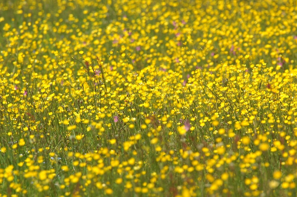 Yellow Meadow by CasparTheRiddle