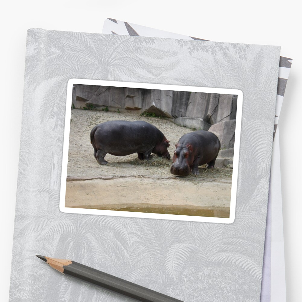 Two Hippos by jdowdell1111