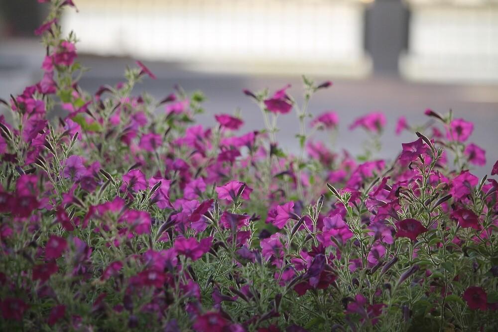 Floral in Charleston by toriorto