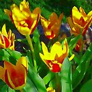 Tulips Aglow by Marie Sharp