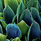Blätter - Maiglöckchen von T.J. Martin