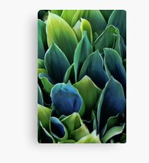 Leaves - Lily of the Valley Canvas Print