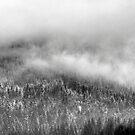 Rolling Fog #2 by hynek