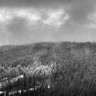 Mist #2 by hynek