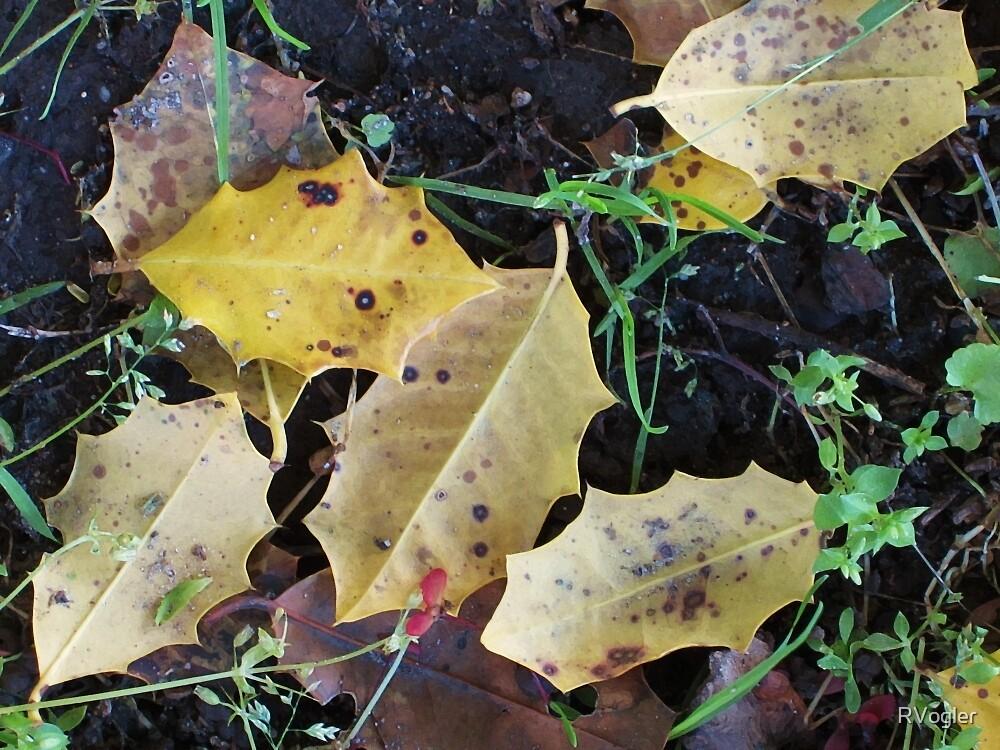 Fall Into Spring by RVogler