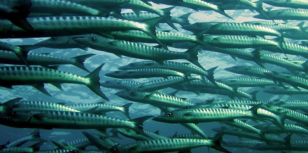 Shoal of fish by Rebel-Lizzie
