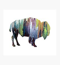 bison Photographic Print