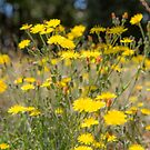 Field Flora by Dave Hare