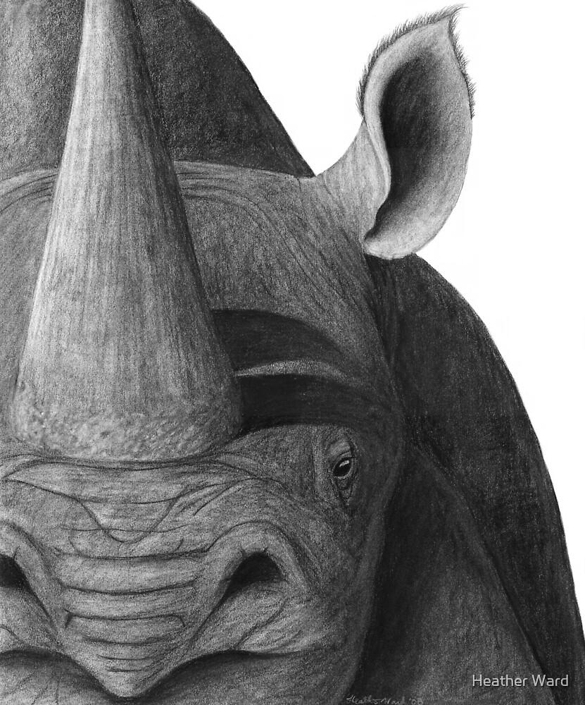 Black on White - Black Rhinoceros by Heather Ward