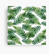 Watercolor summer insulated fern on white background Canvas Print