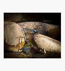 Dragonfly - Chichester  Photographic Print
