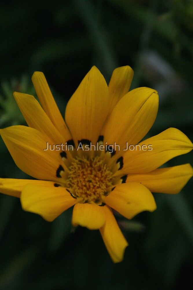 Yellow Pettles by Justin Ashleigh Jones