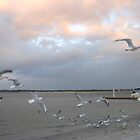 Seagulls at Sunset by MardiGCalero
