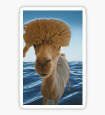 Alpacas on the water Sticker