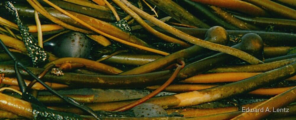 Kelp Pile (detail) by Edward A. Lentz