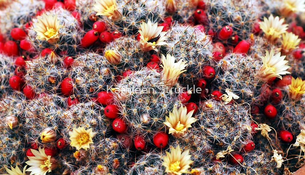Flowering Cactus by Kathleen Struckle